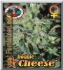 Big Buddha Double Cheese Female 10 Cannabis Seeds